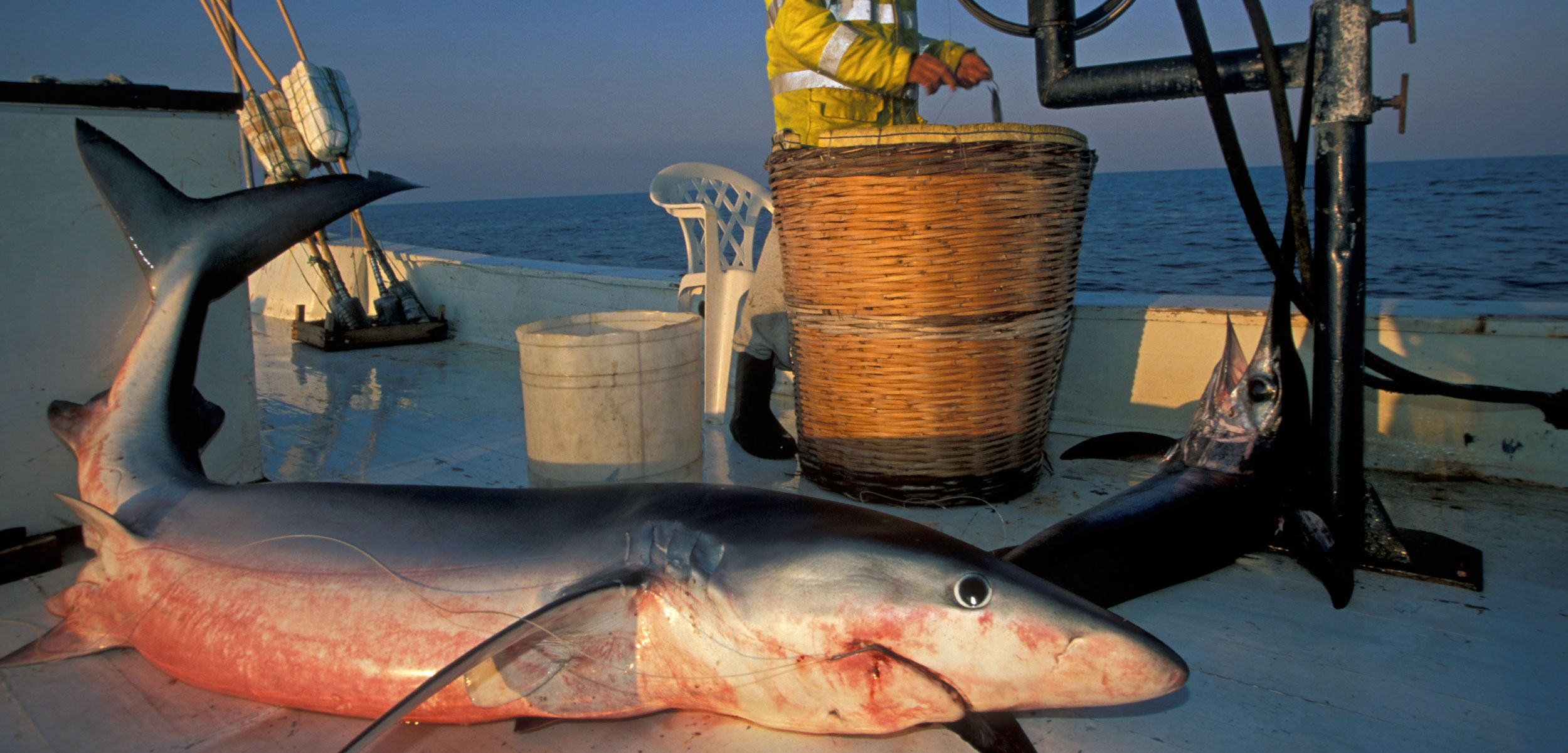 shark on deck of fishing boat