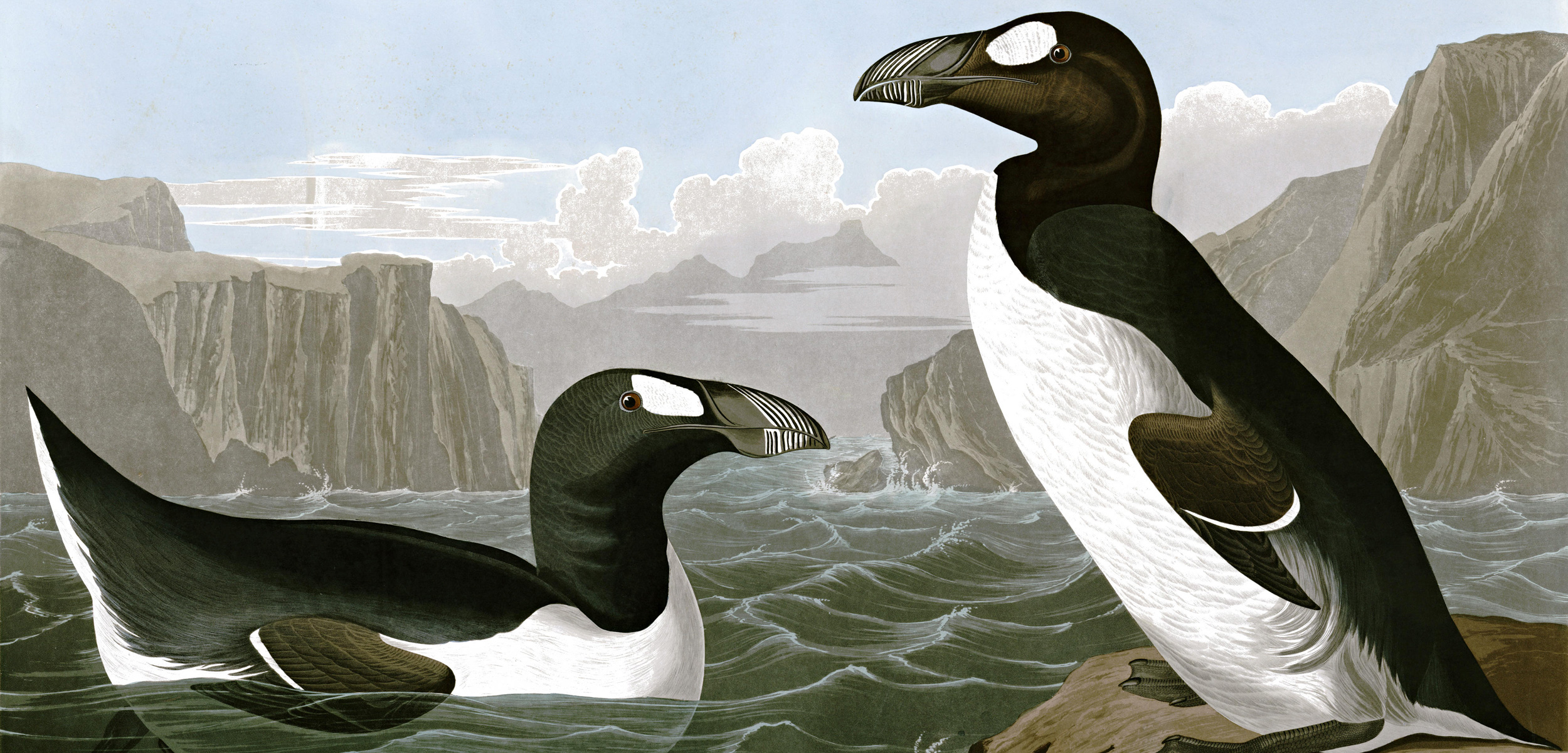 painting of great auks