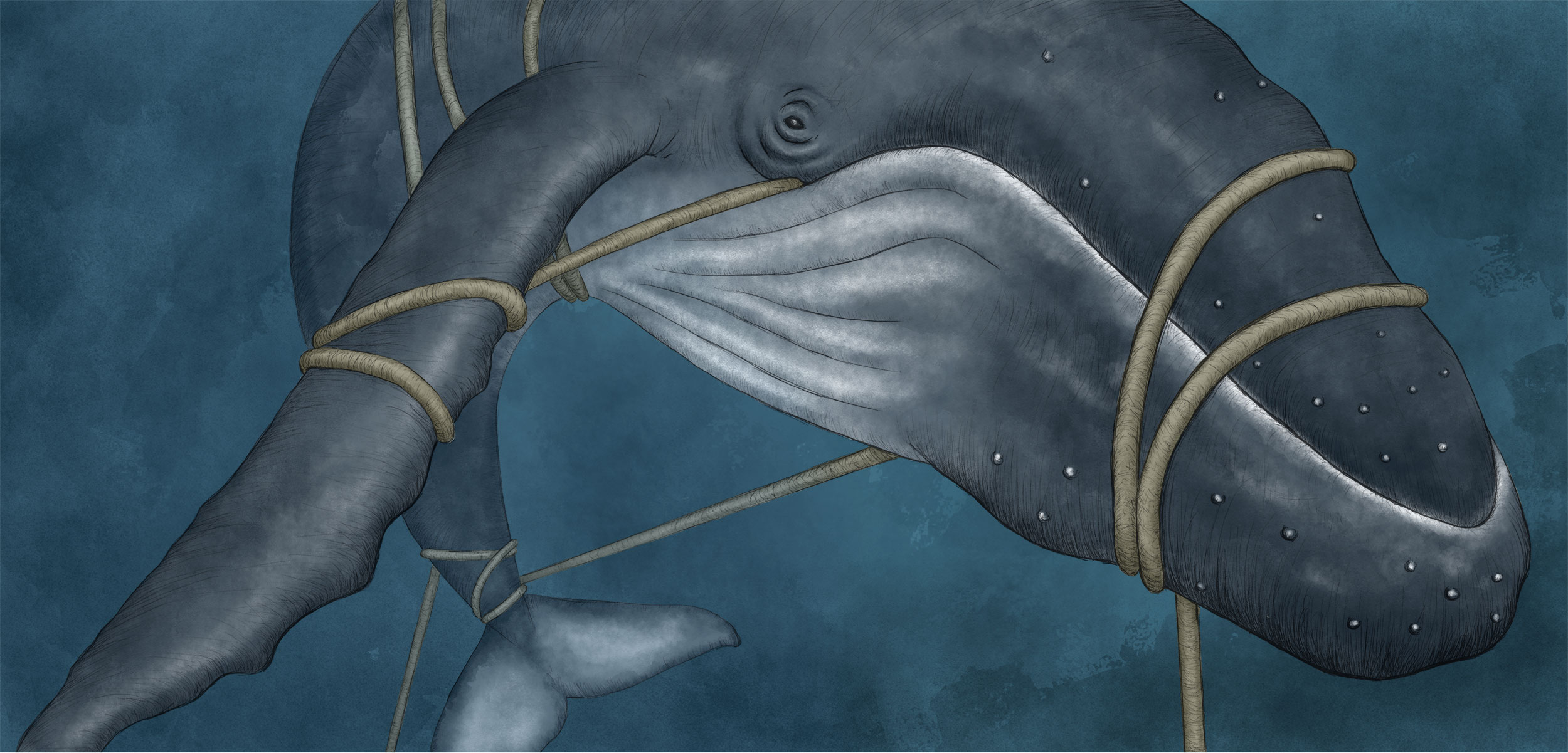 illustration of an entangled humpback whale
