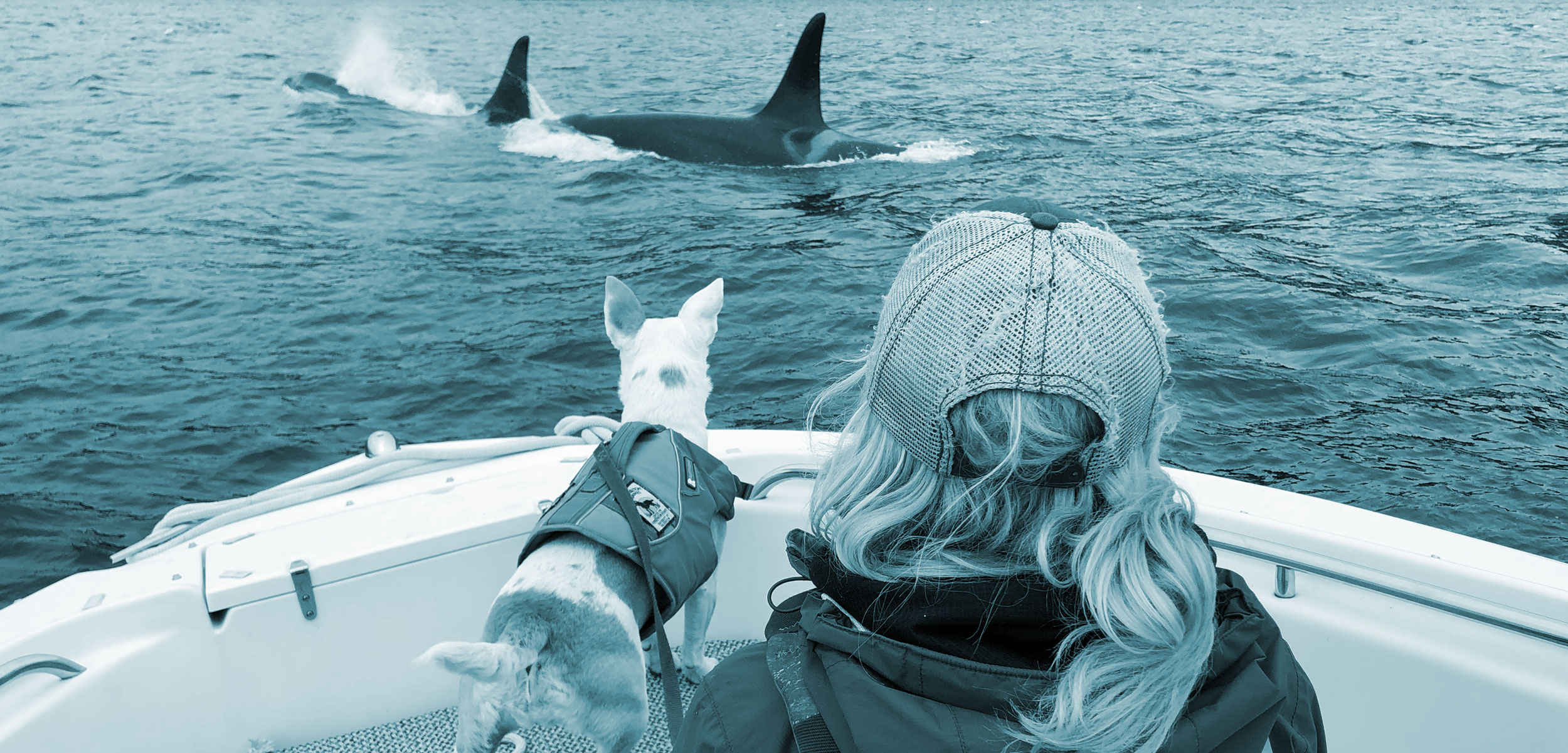 Eba and biologist Deborah Giles, watch killer whales
