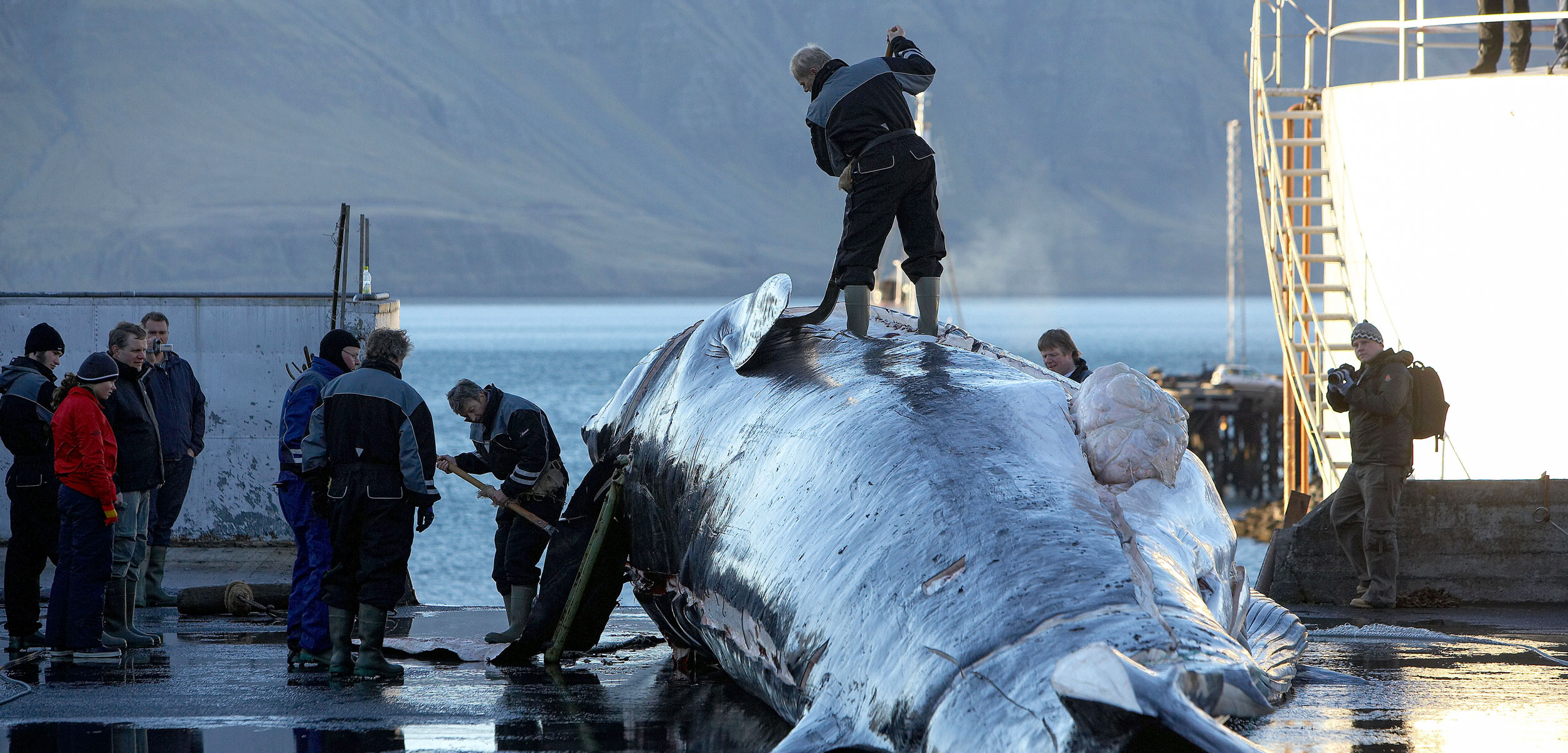 People standing ontop of a whale on a beach infront of the ocean