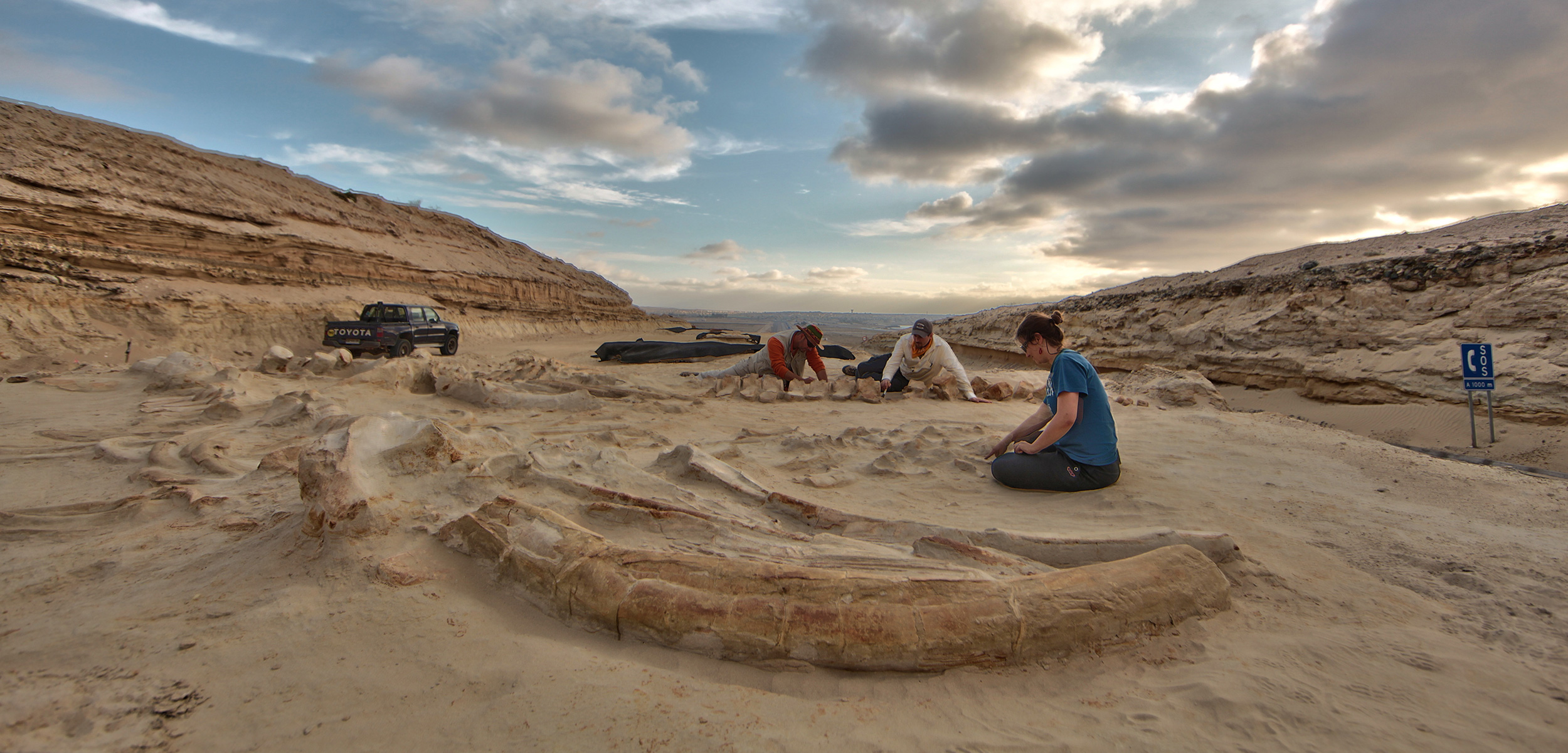 Chilean and American scientists study several fossil whale skeletons at Cerro Ballena (whale hill) in Chile's Atacama Desert in 2011. Photo by Adam Metallo/Smithsonian Institution