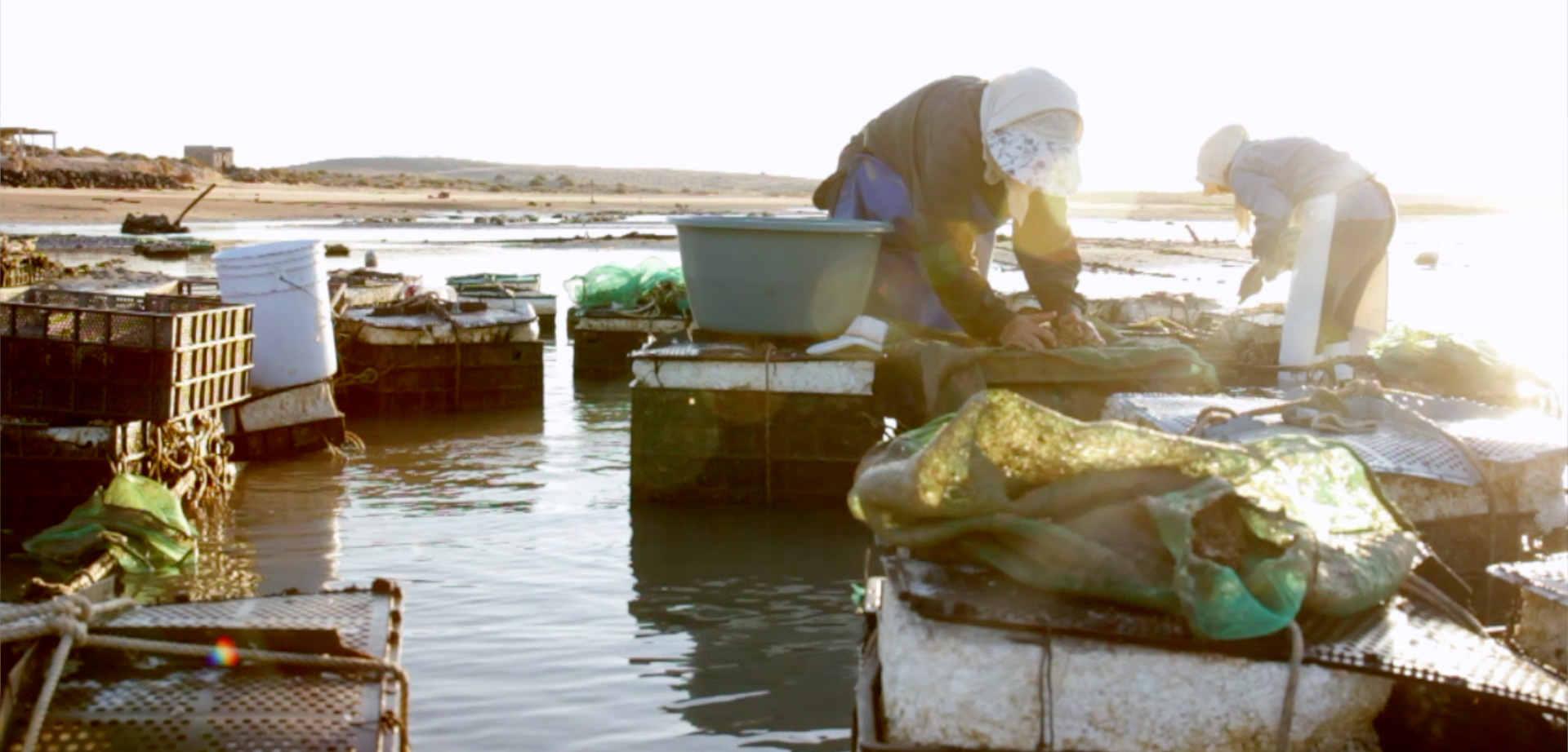 woman farming oysters in Mexico