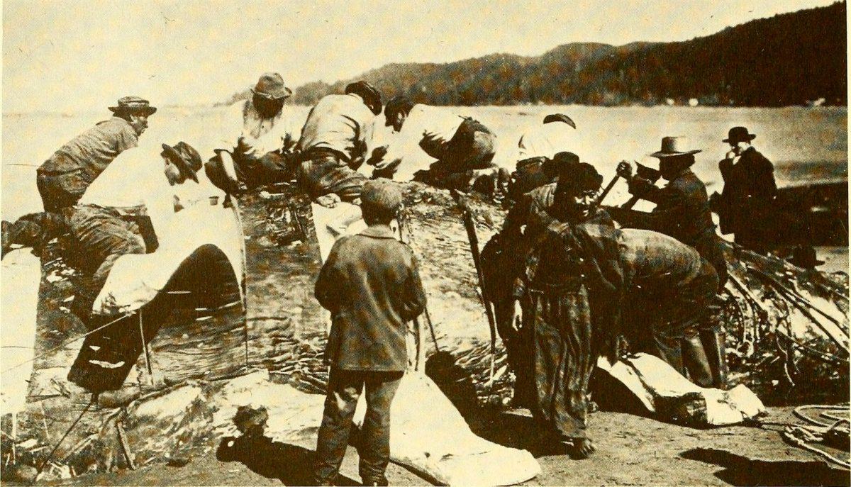 Makah whale hunt 1910