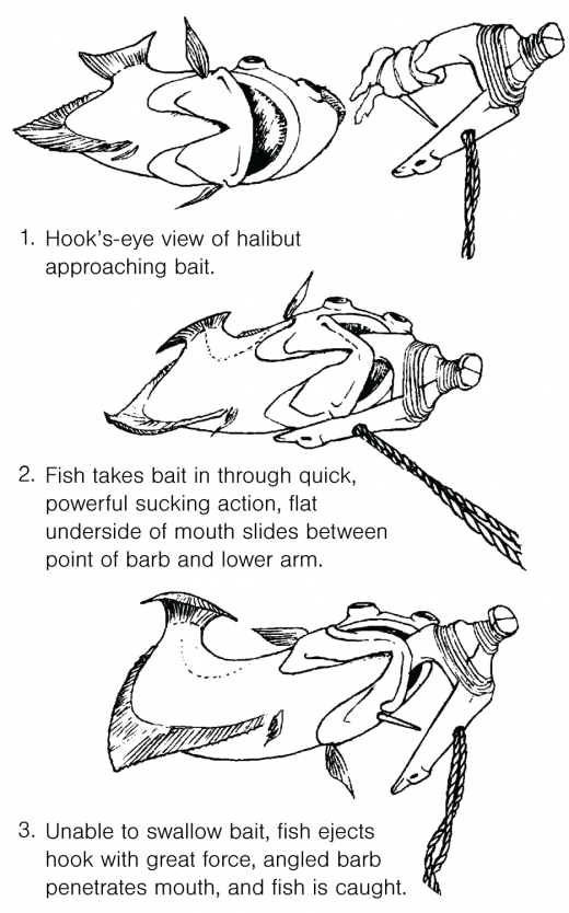 graphic showing how the halibut hooks work