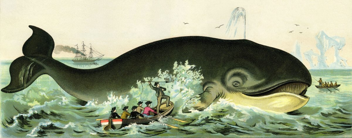 whale hunting illustration circa 1885
