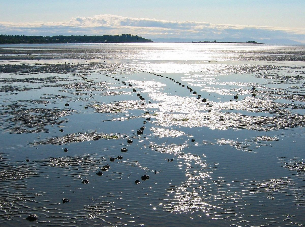 Fish trap remains in the intertidal