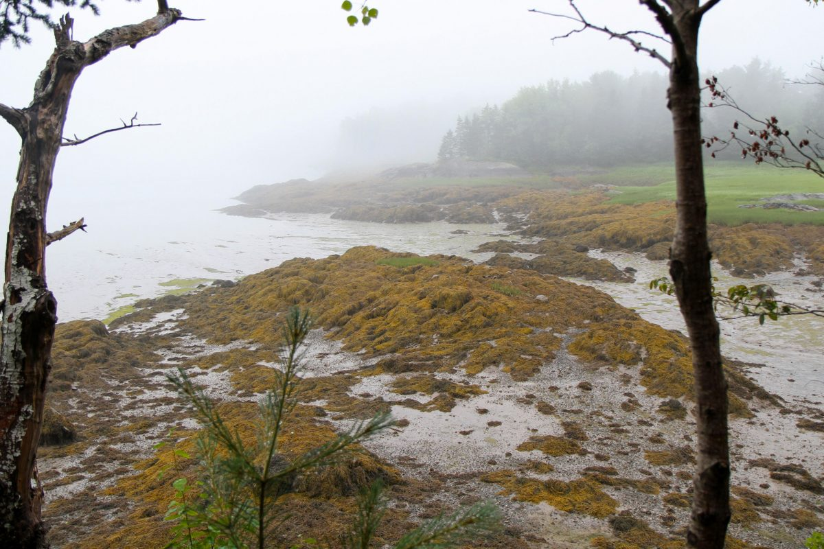 intertidal zone at low tide in Cobscook Bay, Maine