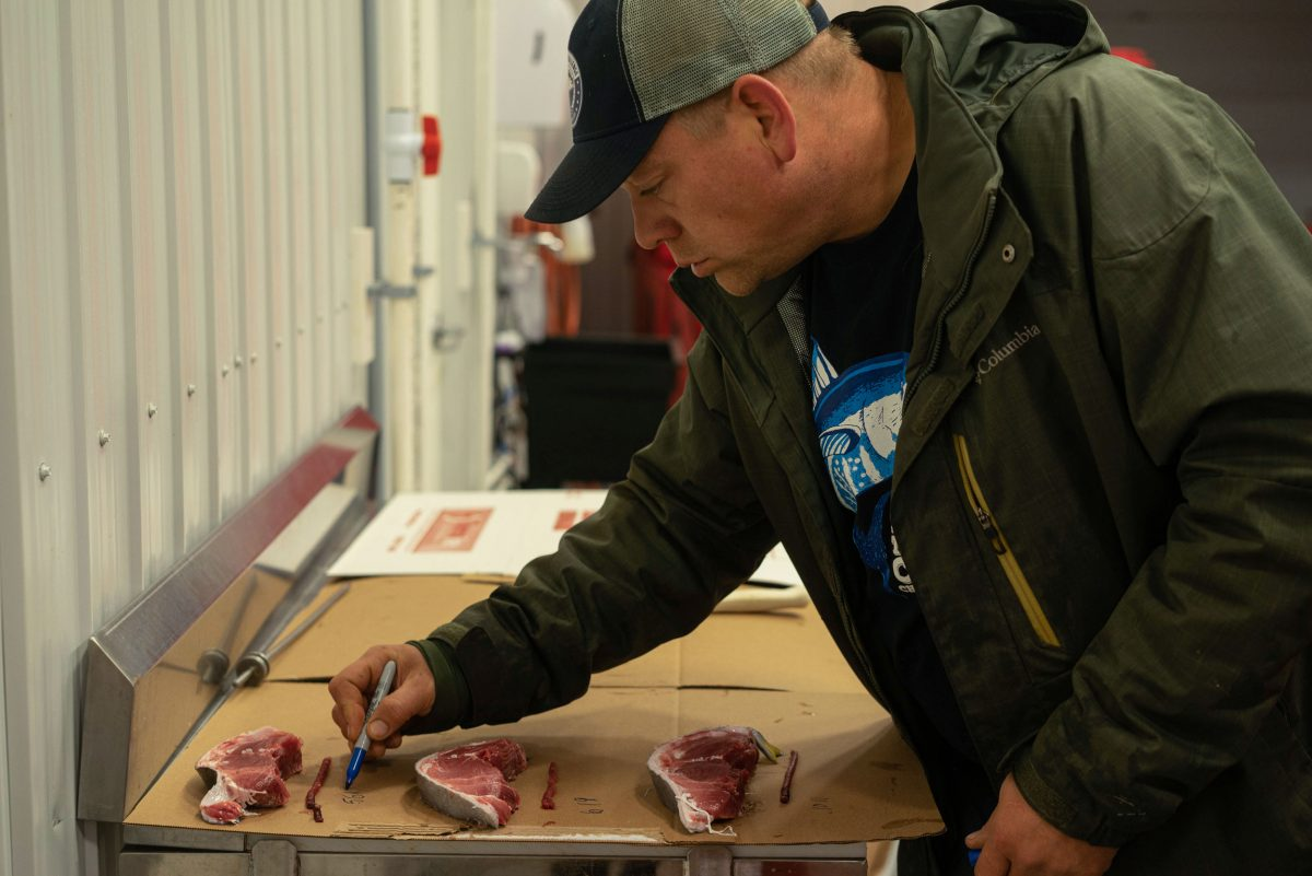 Jason Tompkins grading tuna before calling brokers in Tokyo. Photo by Sasha Chapman