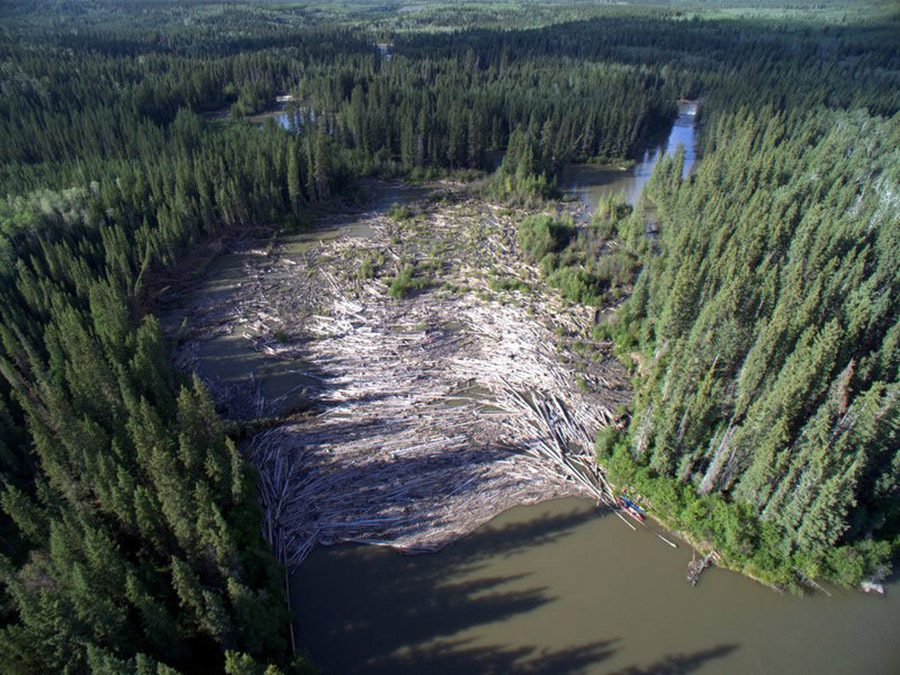 aerial photo of a logjam on the Slave River