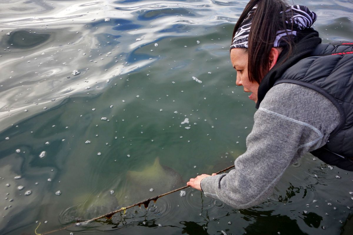 Louisa Housty-Jones pulls up her lines that were set to intercept herring eggs with hemlock branches and strands of kelp
