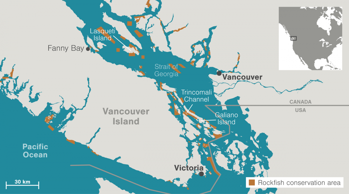 map of rockfish conservation areas in British Columbia