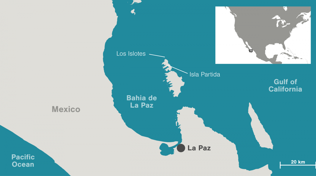 Map of Bahia de La Paz, Los Islotes, and Isla Partida