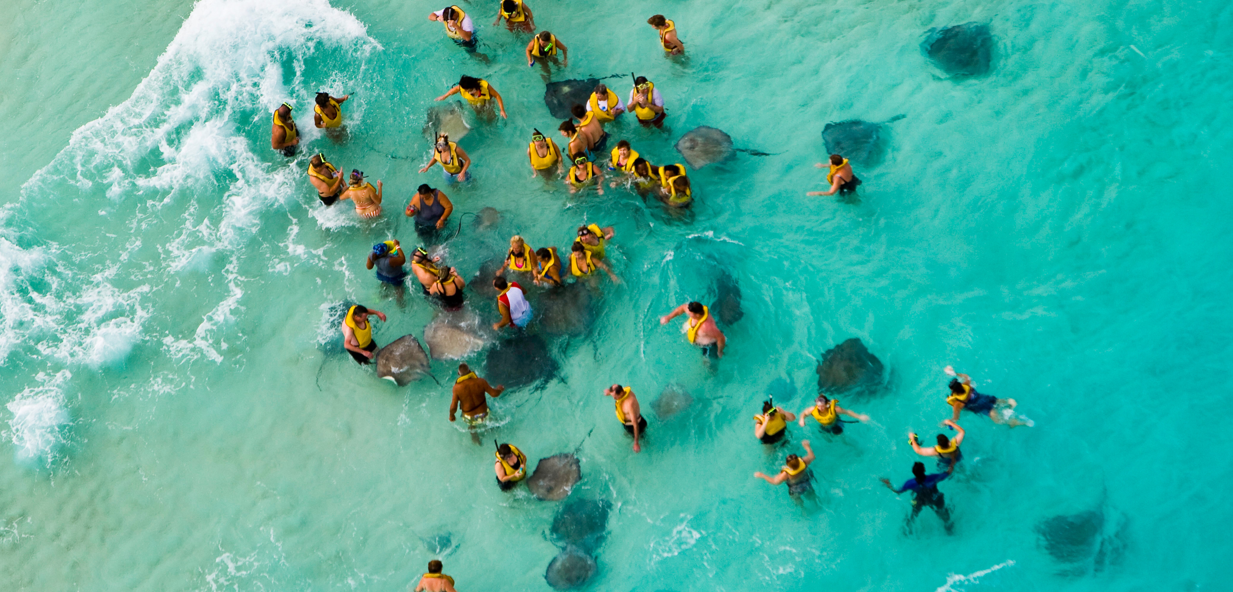 Nearly 800,000 people feed stingrays off Grand Cayman Island each year. Photo by Laurie Chamberlain/Corbis