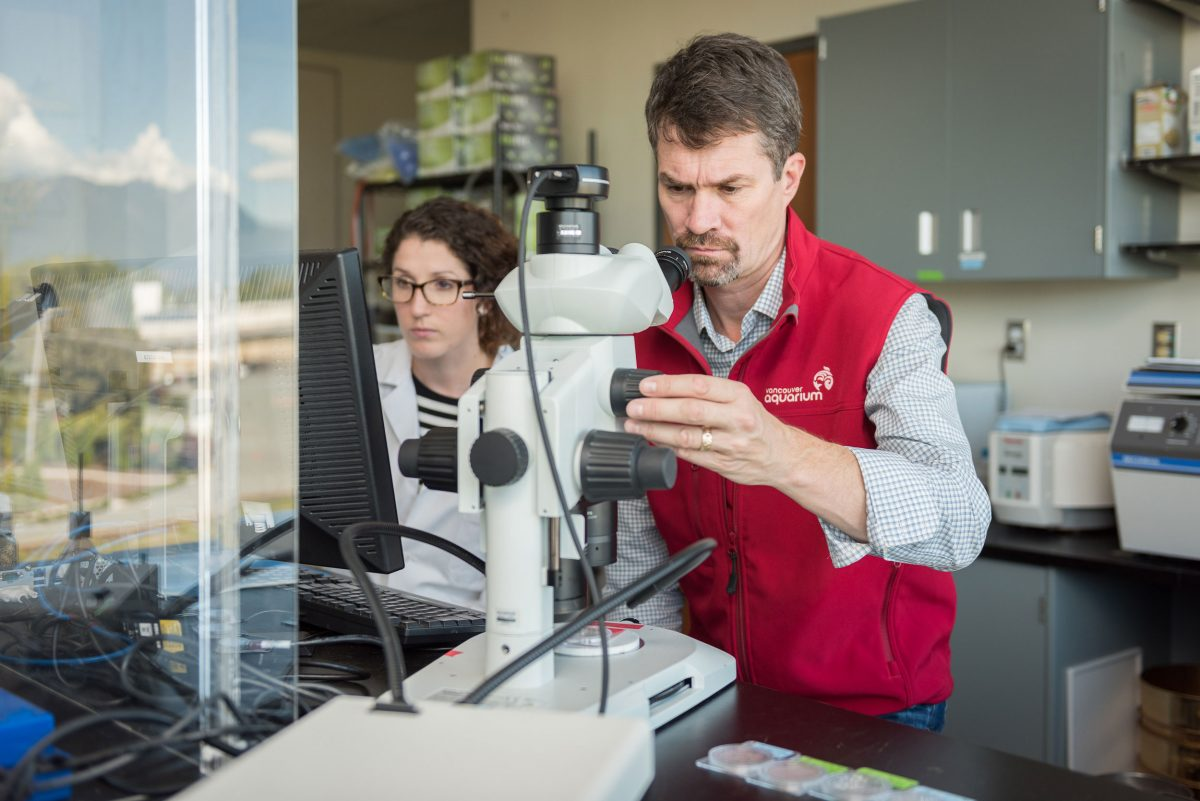 Peter Ross examines microfibers. By examining the unique chemical signatures of different kinds of fibers, he hopes to help narrow down where the microfibers come from in any given sample of seawater. Photo courtesy of the Ocean Wise Conservation Association