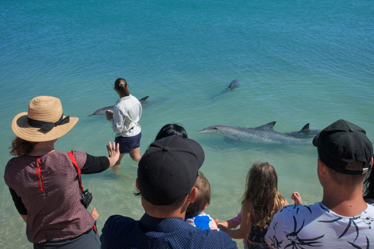tourists at Monkey Mia Shark Bay, Australia