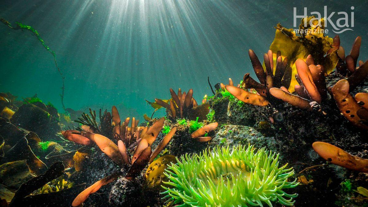 ocean floor free zoom background