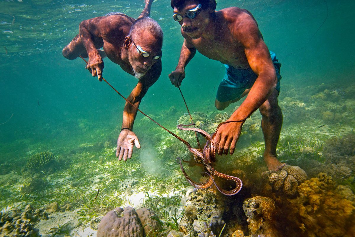 Bajau spearfishers catch an octopus