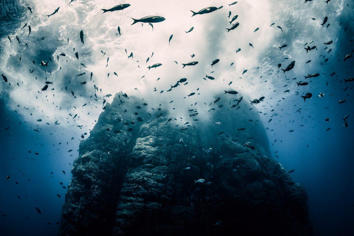 underwater photo of fish around volcanic spire