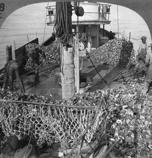 "Early European settlers were struck by the abundance of oysters in the Chesapeake Bay, noting that they ""lay as thicke as stones,"" and for centuries fishermen raked in large catches. But in the 1970s, the catches began declining in an alarming way. Photo by Granger Historical Picture Archive/Alamy Stock Photo"