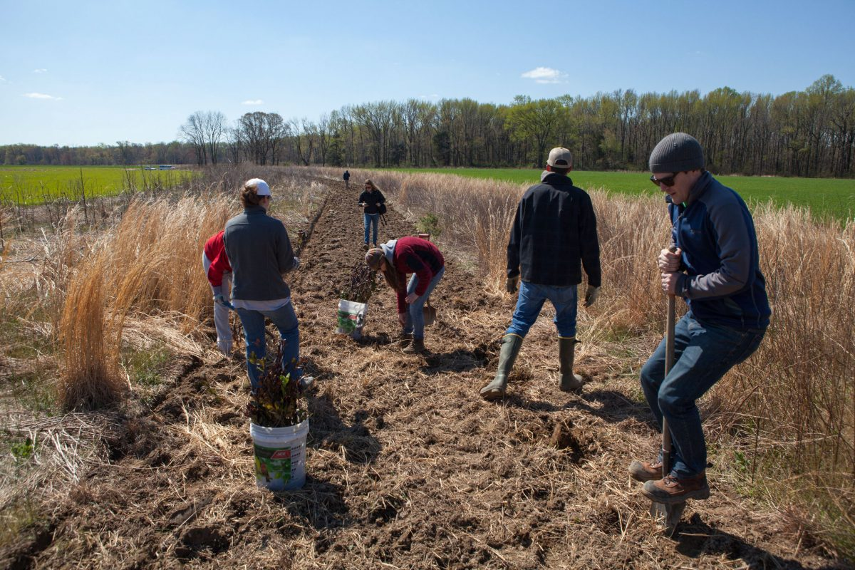 Dan Small and a team plants bayberries