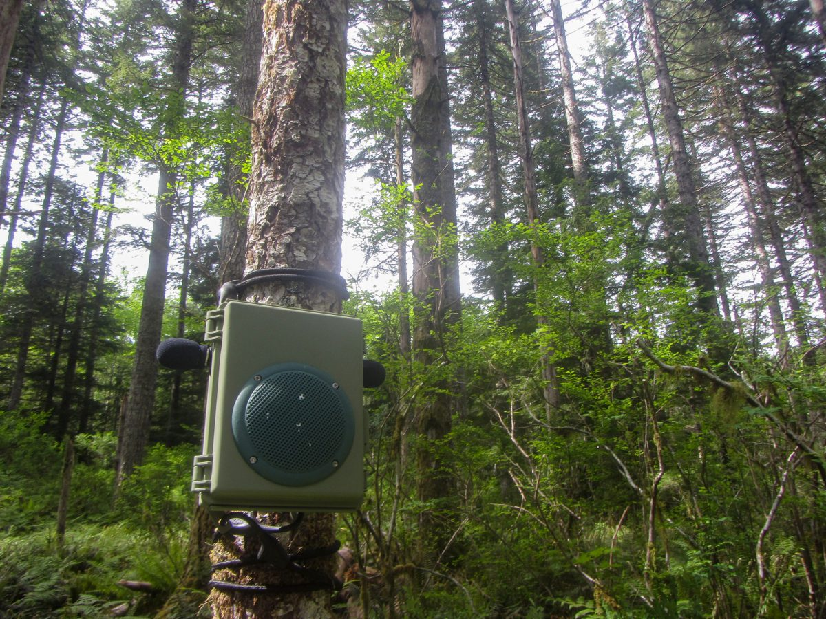 audio playback device in the woods