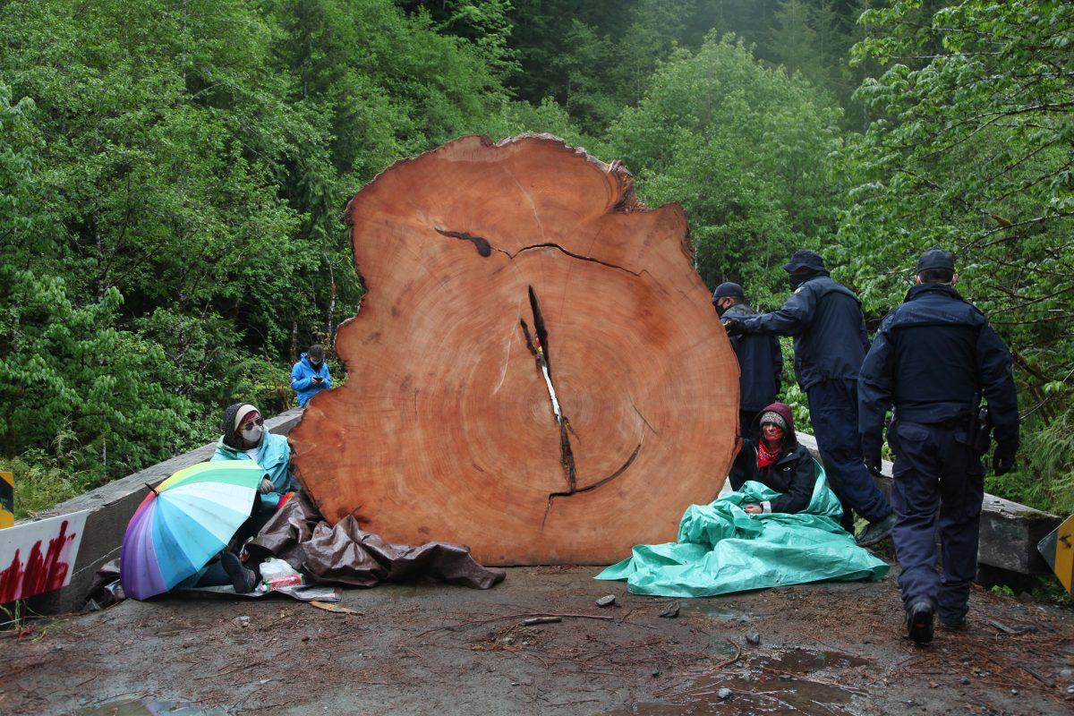 protestors chained to tree stumps at Fairy Creek blockade