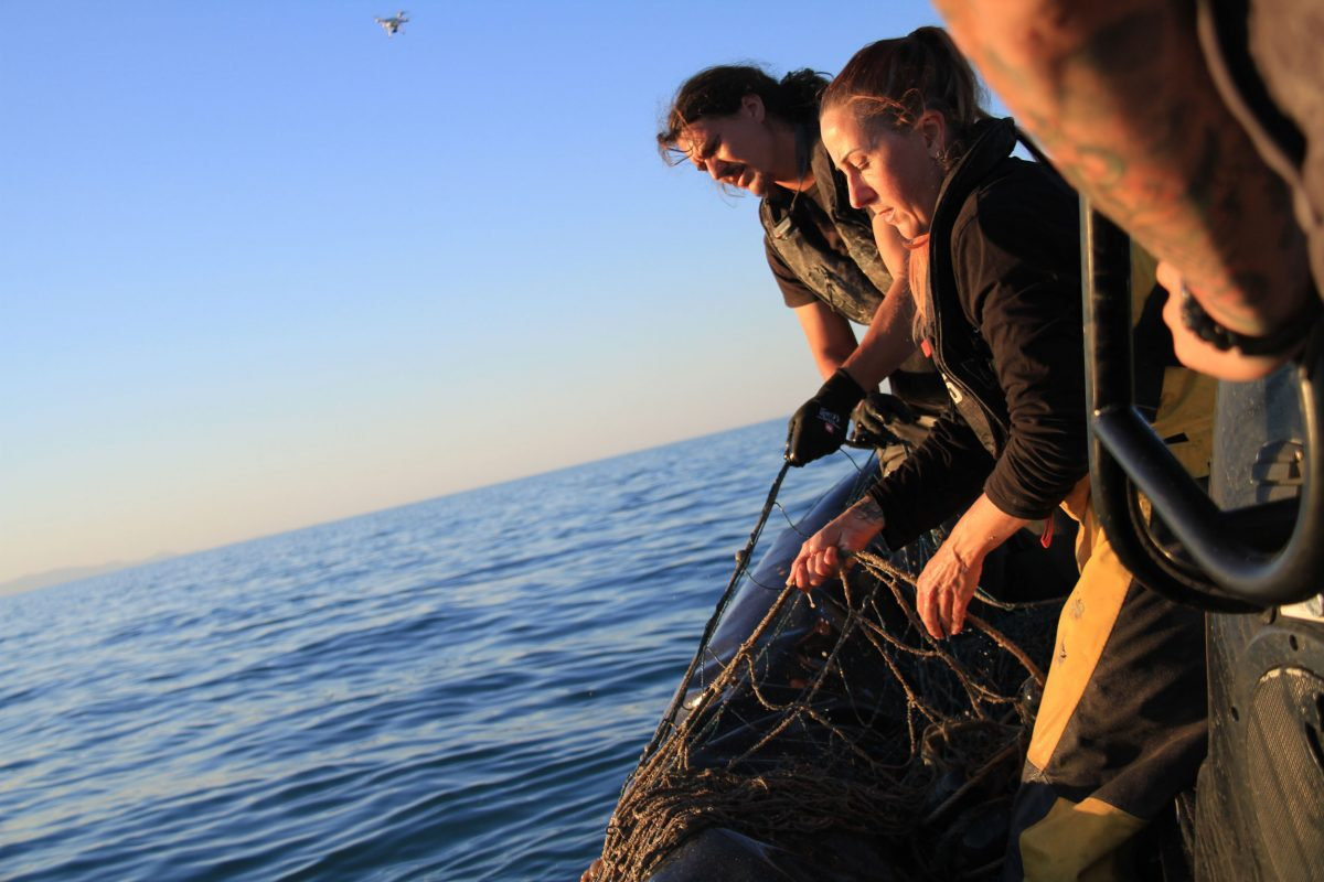 Sea Shepherd volunteers Loïc Le Gars and Emillie Reader, deckhands on the Sam Simon during a season of Operation Milagro, haul in an illegal totoaba net, while bosun Giacomo Giorgi adjusts the boat's course to avoid tangling the propeller in the net's drifting line. Photo by Sarah Gilman