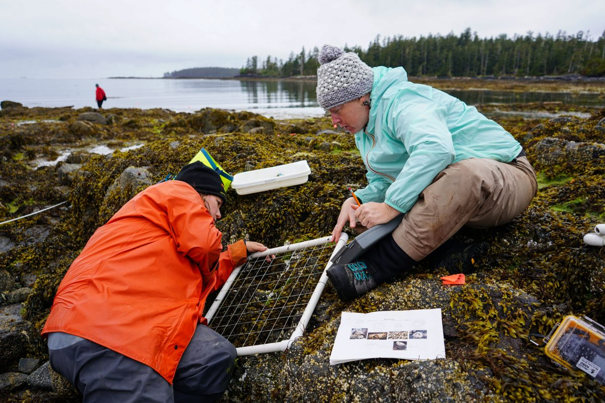 Researchers on Goose Island, British Columbia
