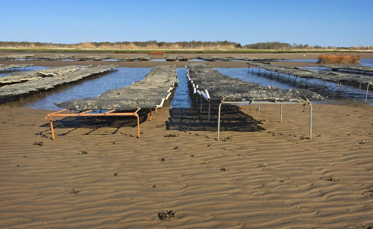 oyster farming racks in Delaware Bay