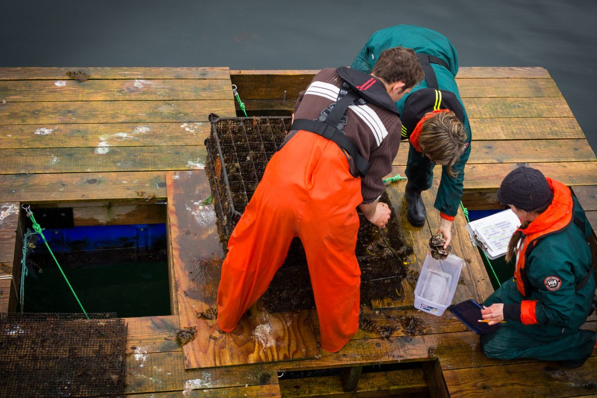 This raft off the shore of British Columbia's Quadra Island is home to scallops, oysters, and mussels that can help researchers understand the impacts of climate change on shellfish. Photo by Josh Silberg
