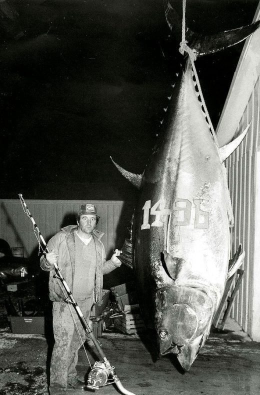 In Prince Edward Island, Canada, a fisher caught the largest recorded bluefin in history in 1979. Photo courtesy of the International Game Fish Association
