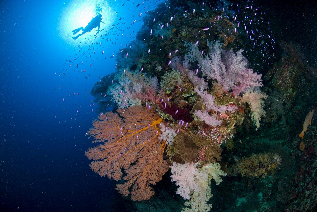 coral reef Rowley Shoals, Western Australia