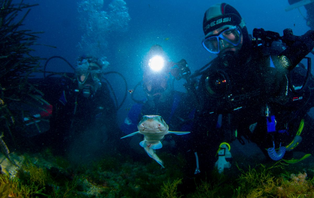 divers with juvenile small-spotted catshark