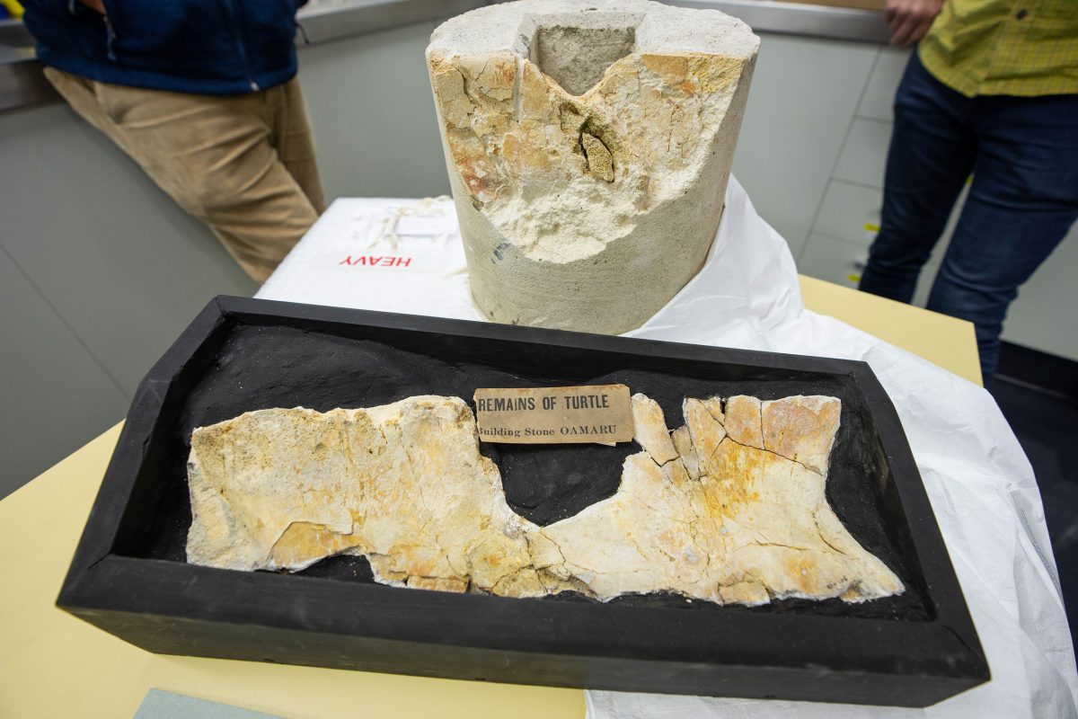 The fossilized turtle remains were found inside limestone