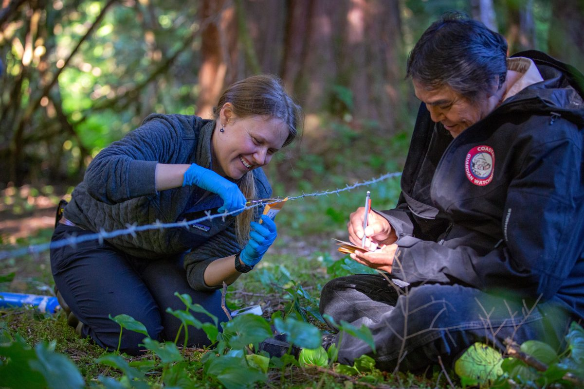 Megan Adams, a bear researcher, and Patrick Johnson, a Wuikinuxv Coastal Guardian Watchman, collect bear hair samples at a site close to the Wuikinuxv village.