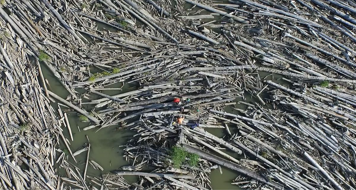aerial photo of researchers on a logjam on the Slave River