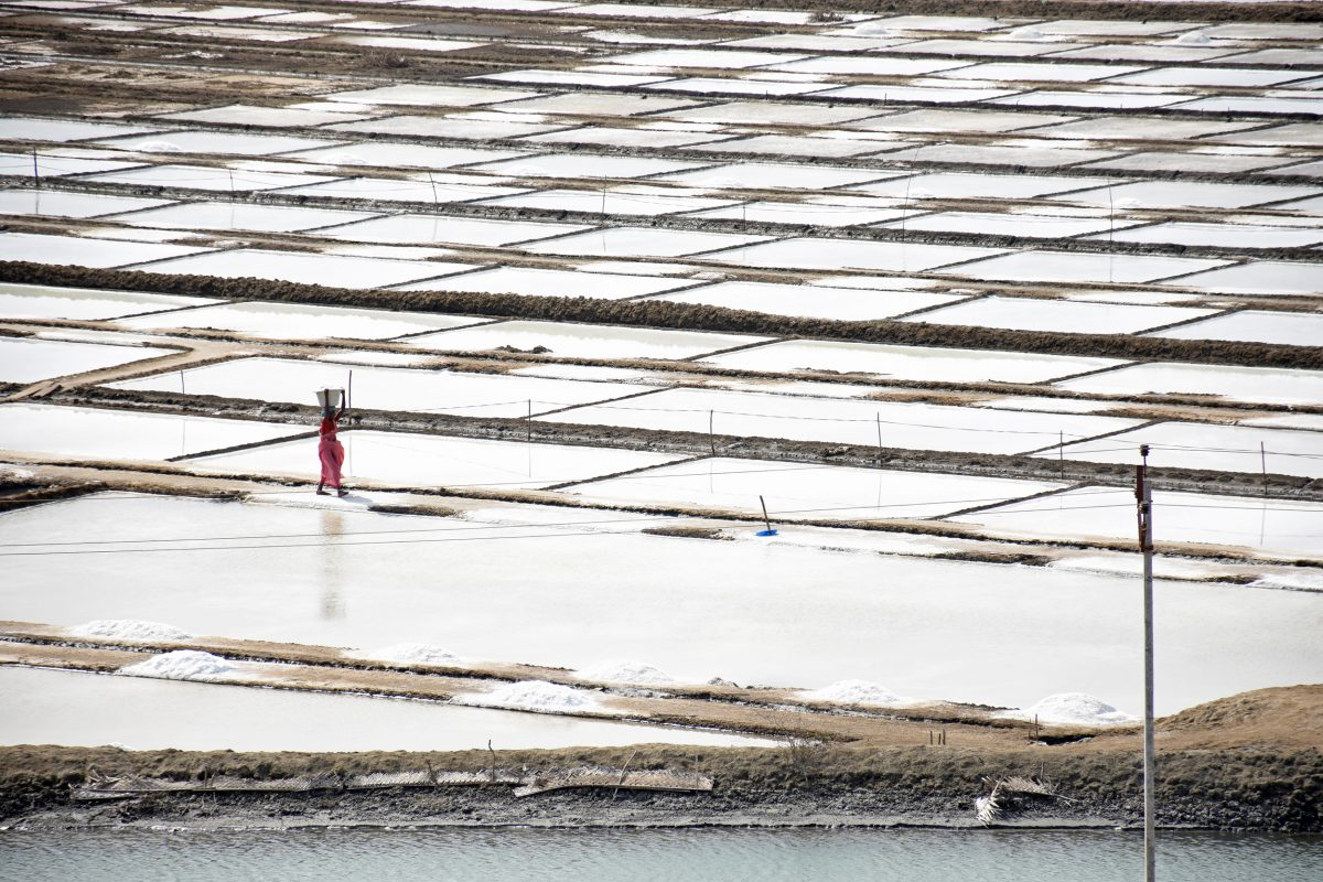 salt pans, Point Calimere, Tamil Nadu, India