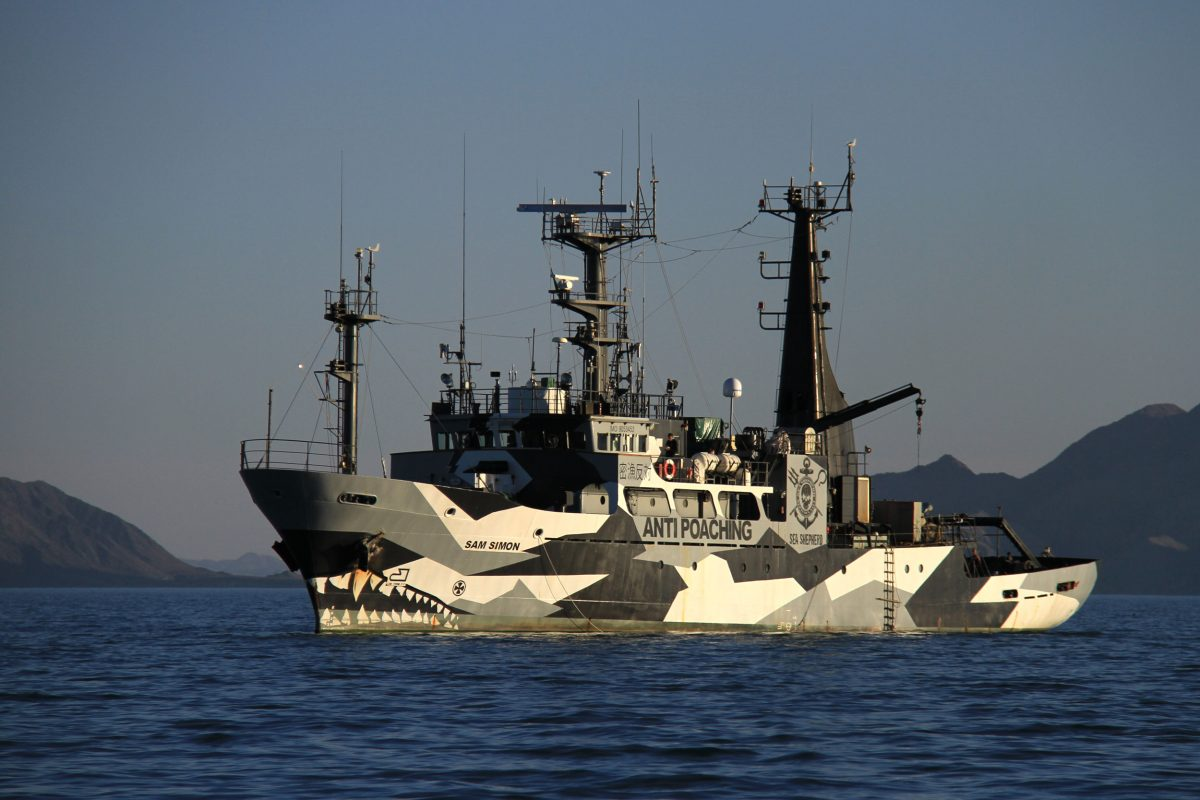 Sea Shepherd's MV Sam Simon patrols the Upper Gulf in April 2017, dragging grappling hooks in hopes of snagging illegal totoaba nets. The hardline environment group, which is accustomed to controversy, has drawn fire from some leaders in the fishing community because of escalating local tensions over fishing restrictions and heightened enforcement measures meant to protect vaquitas. Photo by Sarah Gilman
