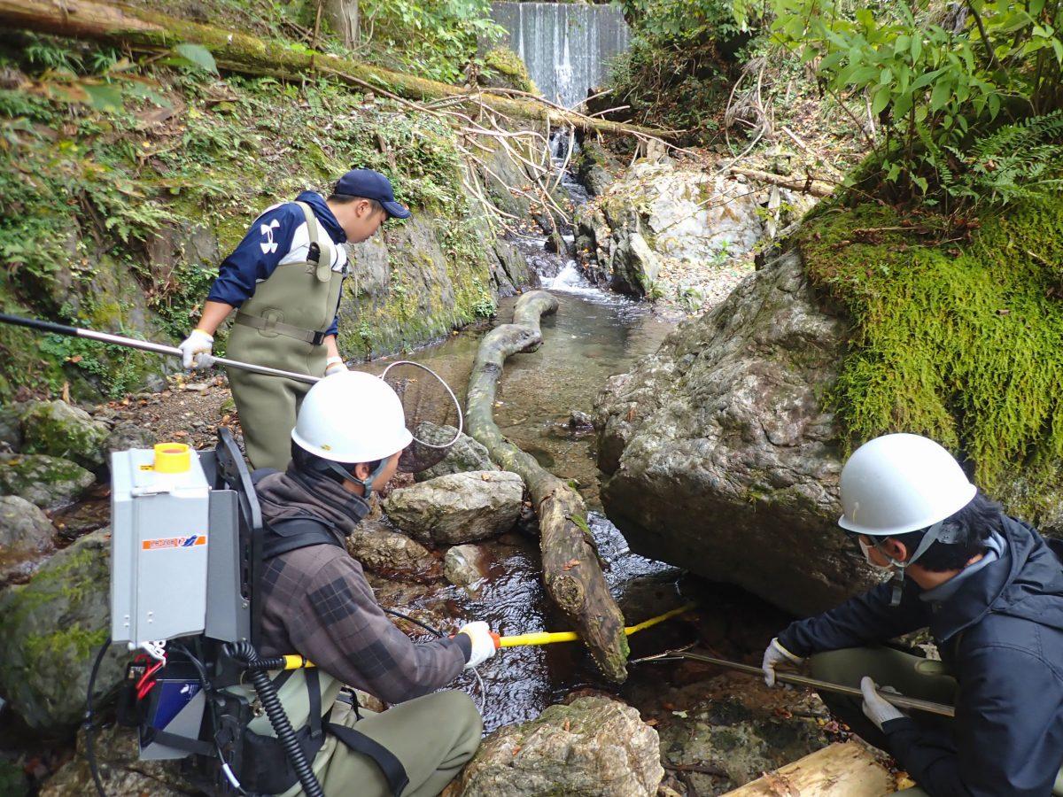 Fisheries scientists working with Goro Yoshizaki of Tokyo University sample Japanese char in the Arakawa River north of Tokyo, Japan