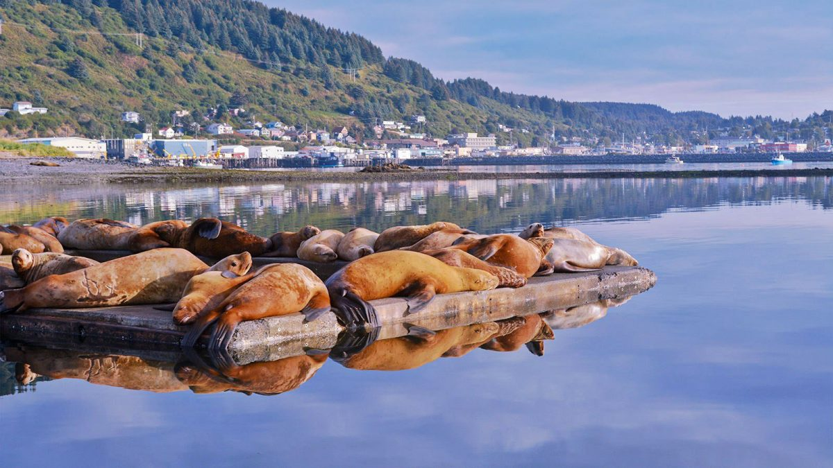 Sea lions sunbathe on a dock along the coast of the Alaska island of Kodiak