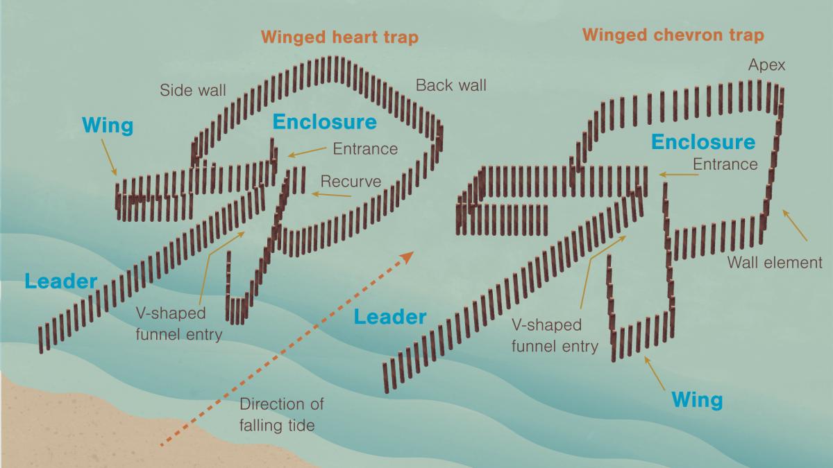 diagram of fish trap shapes