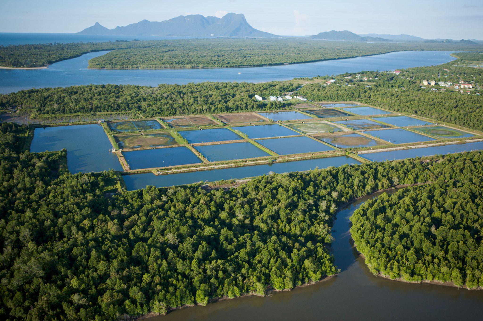 shrimp-pond-mangrove-resoration-2048x1362