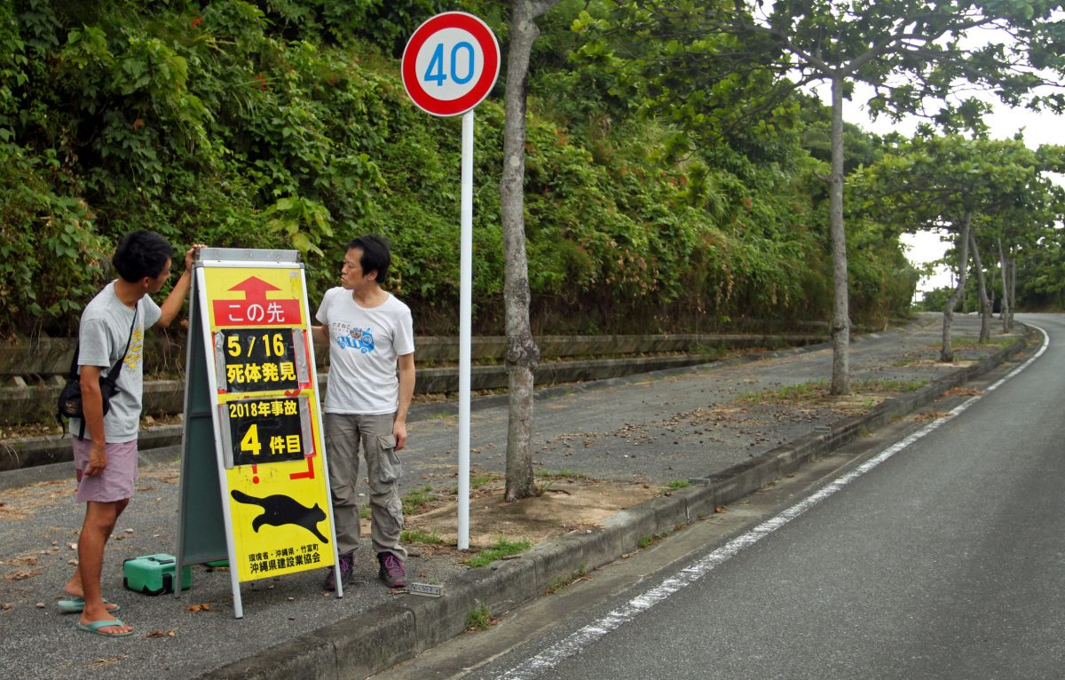 Yusuke Takayama (left) and Masayuki Sakamoto from the Japan Tiger and Elephant Fund examine a road sign on Iriomote Island, Japan, indicating how many wildcats have been killed to date in 2018 and placed at the site of the last fatal accident. Photo by Rachel Nuwer