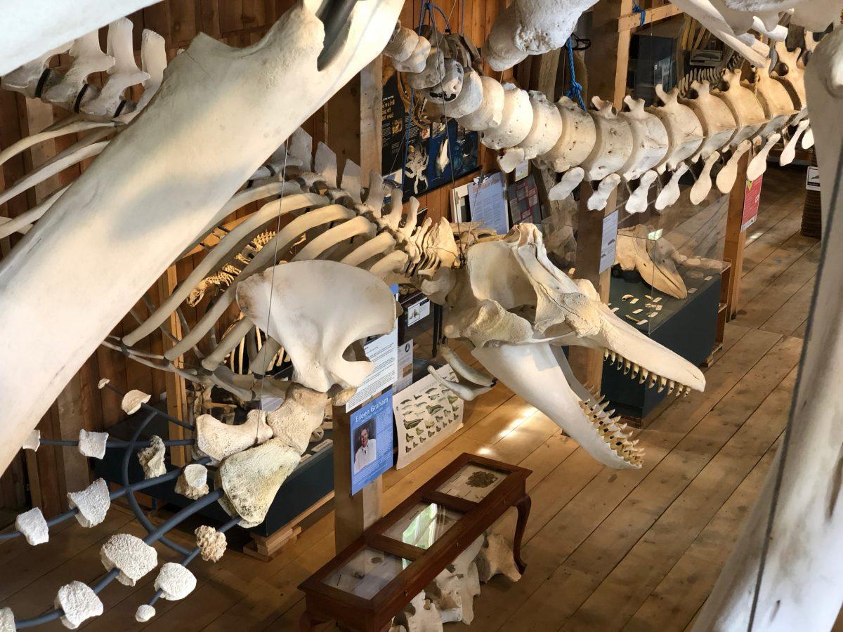 Whale Interpretive Center at Telegraph Cove, British Columbia