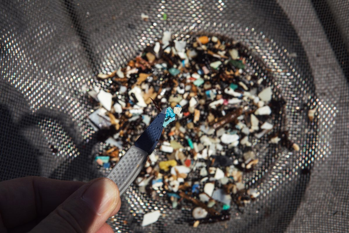 A closeup of microplastics being sorted after being pulled from the ocean