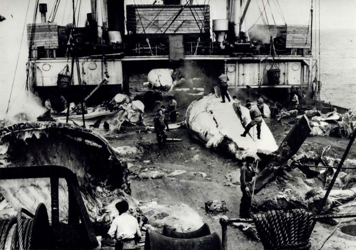 Russian whaling factory ship