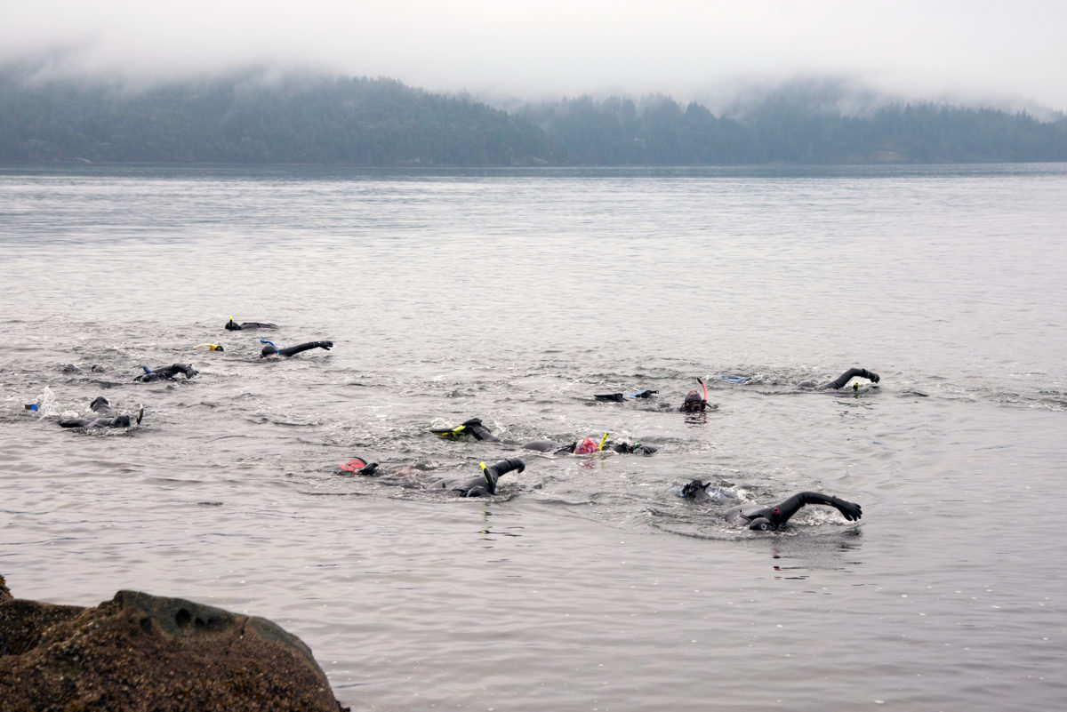 The Salt Spring Seals on a January swim in Vesuvius Bay. Photo by Shanna Baker