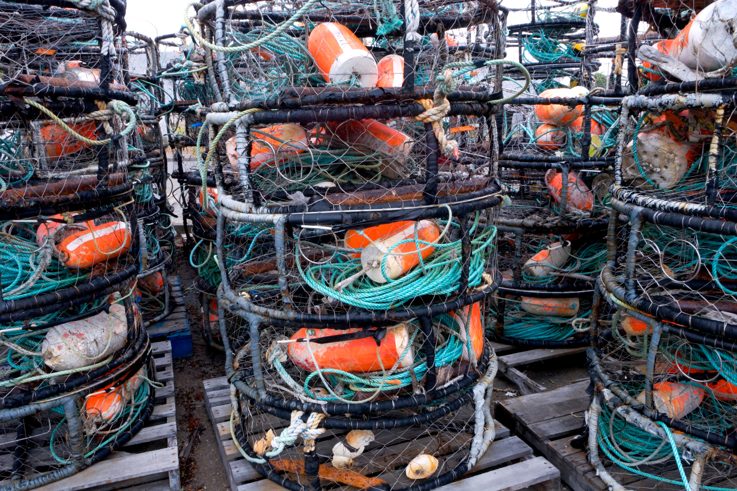 To Save the Whales, Crab Fishers Are Testing Ropeless Gear