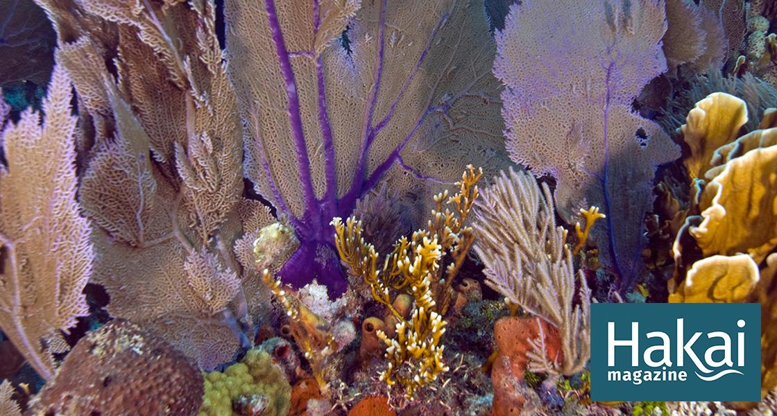 A Panic Room for Corals | Hakai Magazine